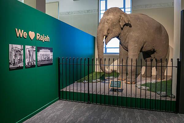 Rajah displayed as taxidermy specimen.